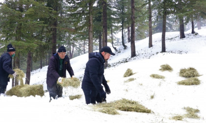 Kahramanmaraş'ın Başkonuş Yaylası'nda yaşayan geyiklere yem bırakıldı